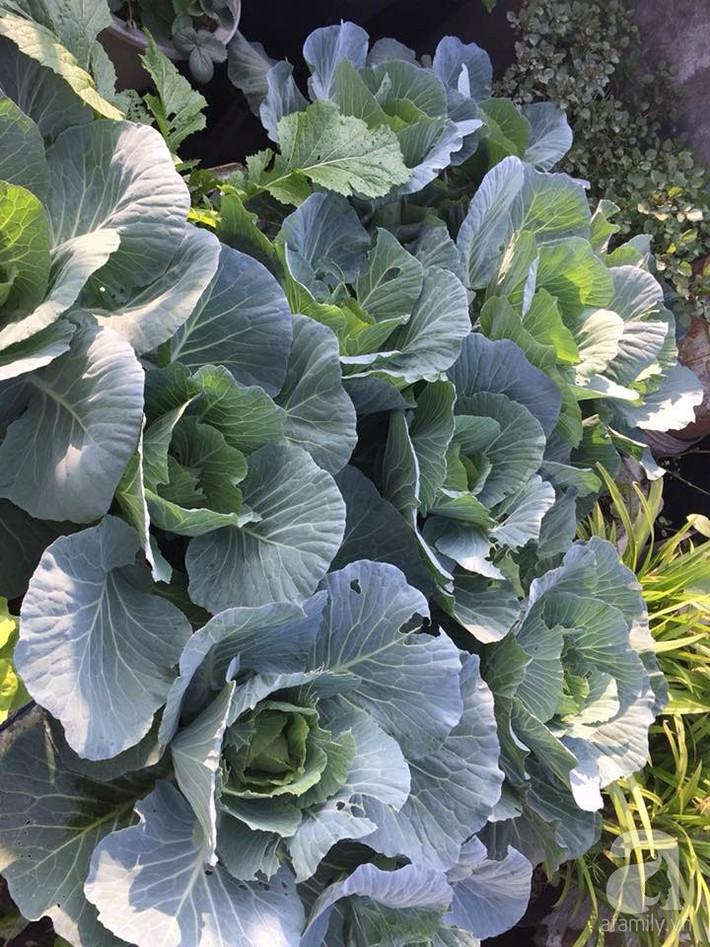 Mẹ đảm ba con trồng rau trên mái, cả nhà quanh năm không lo thiếu thực phẩm sạch ở Hà Nội - Ảnh 19.