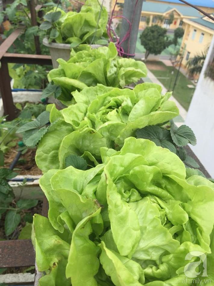 Mẹ đảm ba con trồng rau trên mái, cả nhà quanh năm không lo thiếu thực phẩm sạch ở Hà Nội - Ảnh 18.