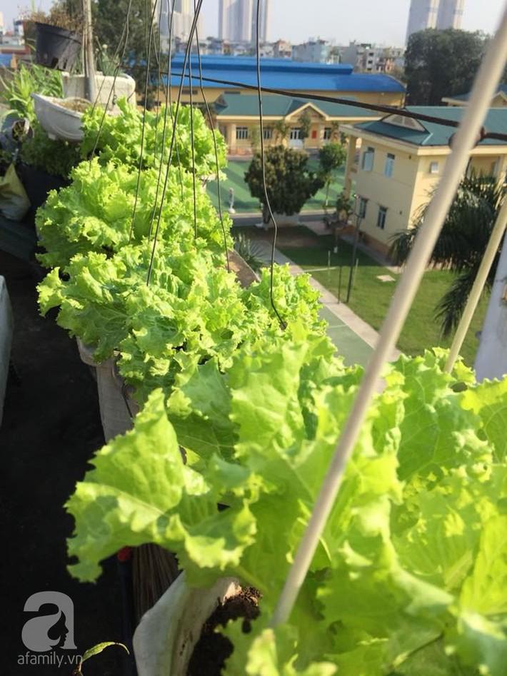 Mẹ đảm ba con trồng rau trên mái, cả nhà quanh năm không lo thiếu thực phẩm sạch ở Hà Nội - Ảnh 17.