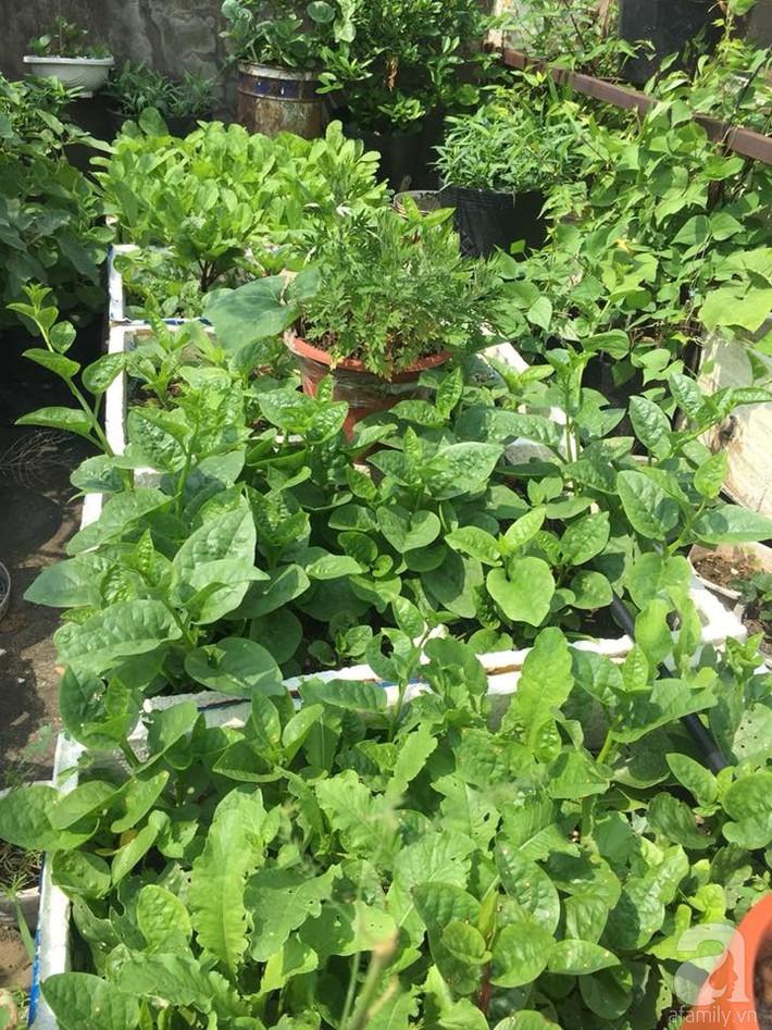 Mẹ đảm ba con trồng rau trên mái, cả nhà quanh năm không lo thiếu thực phẩm sạch ở Hà Nội - Ảnh 3.
