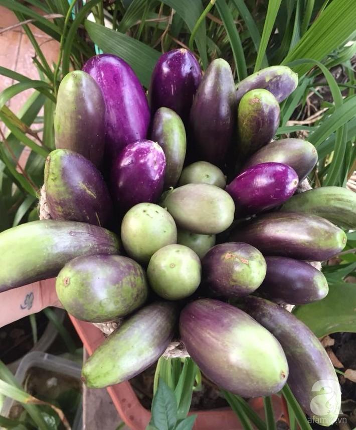 Mẹ đảm ba con trồng rau trên mái, cả nhà quanh năm không lo thiếu thực phẩm sạch ở Hà Nội - Ảnh 14.