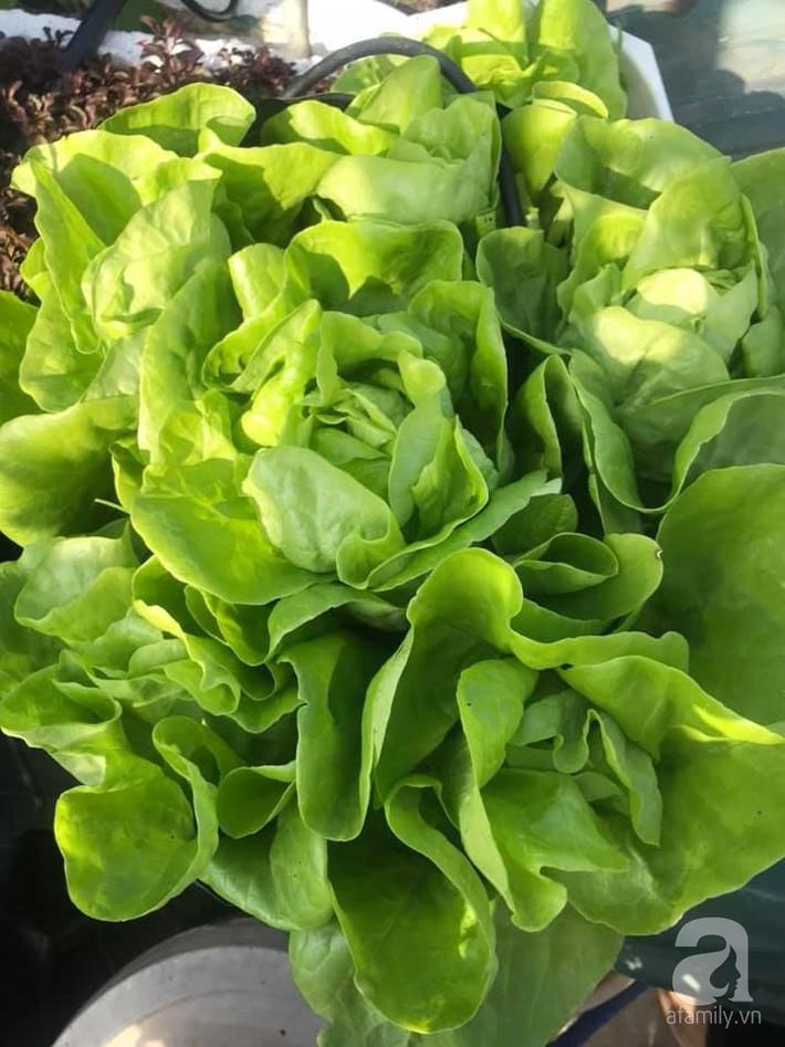 Mẹ đảm ba con trồng rau trên mái, cả nhà quanh năm không lo thiếu thực phẩm sạch ở Hà Nội - Ảnh 11.