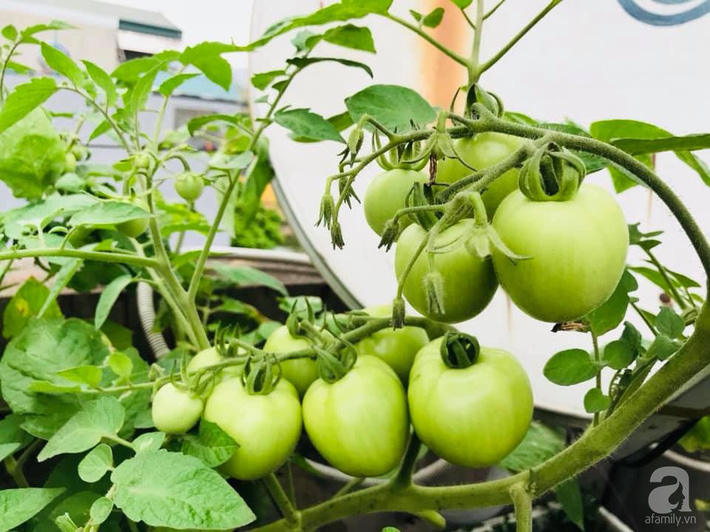 Mẹ đảm ba con trồng rau trên mái, cả nhà quanh năm không lo thiếu thực phẩm sạch ở Hà Nội - Ảnh 8.