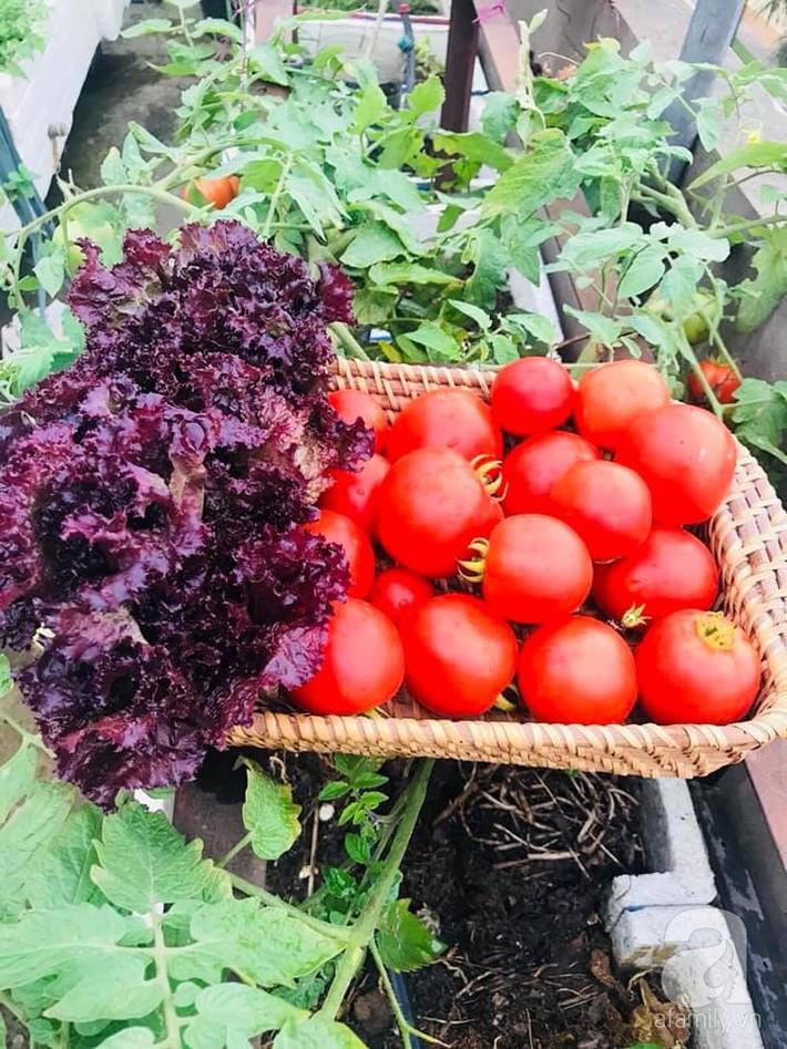 Mẹ đảm ba con trồng rau trên mái, cả nhà quanh năm không lo thiếu thực phẩm sạch ở Hà Nội - Ảnh 9.