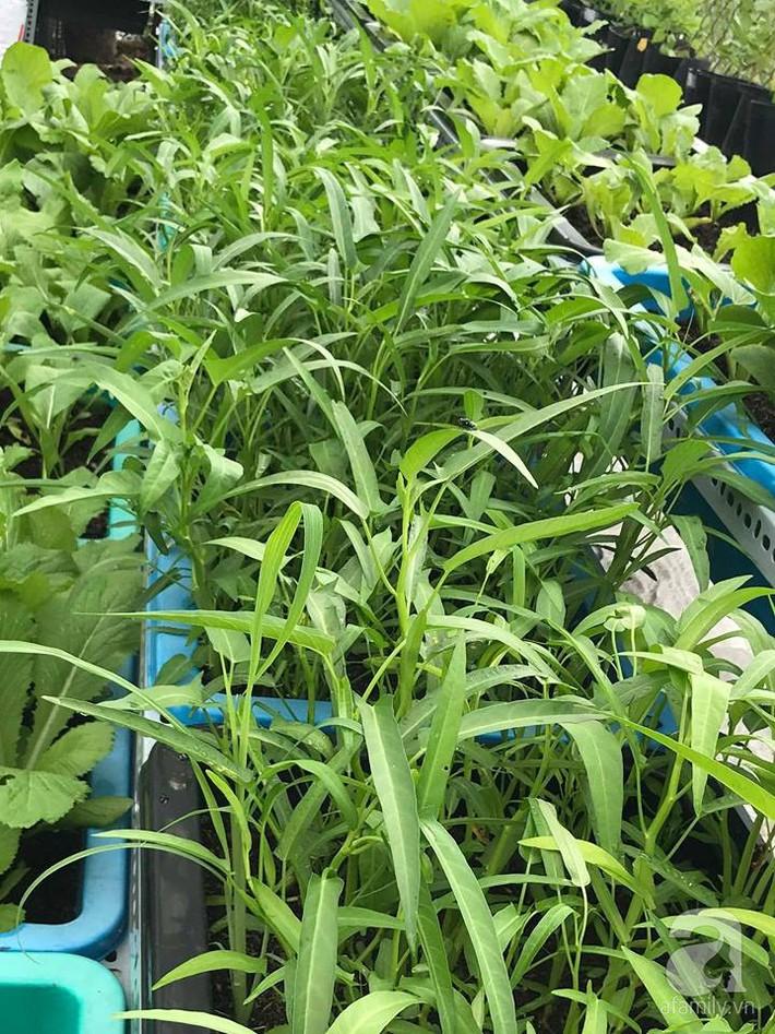Khu vườn xanh mướt một màu như trang trại rau quả sạch mini của mẹ đảm ở Sài Gòn - Ảnh 22.