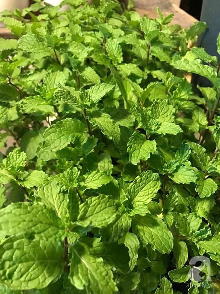 Khu vườn xanh mướt một màu như trang trại rau quả sạch mini của mẹ đảm ở Sài Gòn - Ảnh 21.