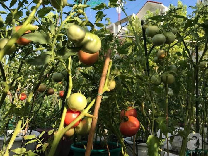 Khu vườn xanh mướt một màu như trang trại rau quả sạch mini của mẹ đảm ở Sài Gòn - Ảnh 16.
