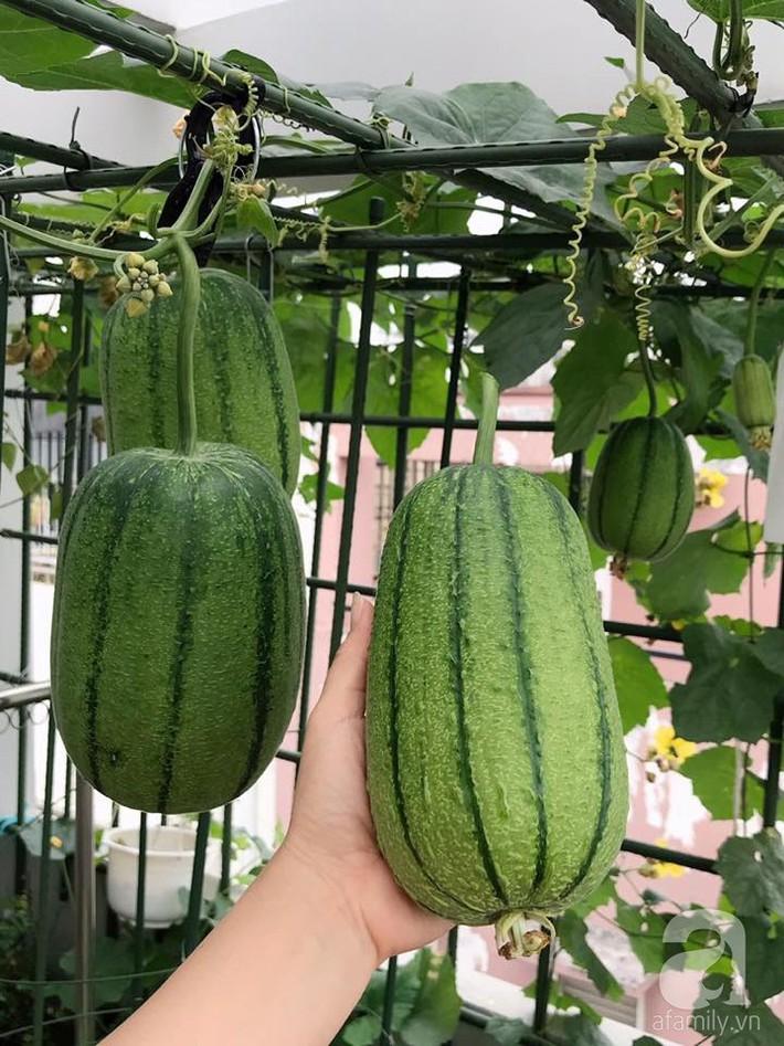Khu vườn xanh mướt một màu như trang trại rau quả sạch mini của mẹ đảm ở Sài Gòn - Ảnh 6.