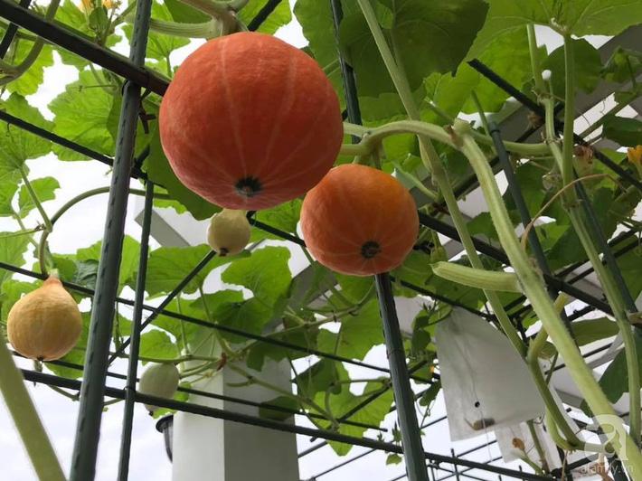 Khu vườn xanh mướt một màu như trang trại rau quả sạch mini của mẹ đảm ở Sài Gòn - Ảnh 5.