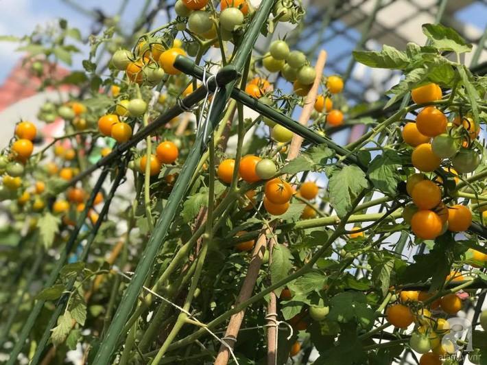 Khu vườn xanh mướt một màu như trang trại rau quả sạch mini của mẹ đảm ở Sài Gòn - Ảnh 3.