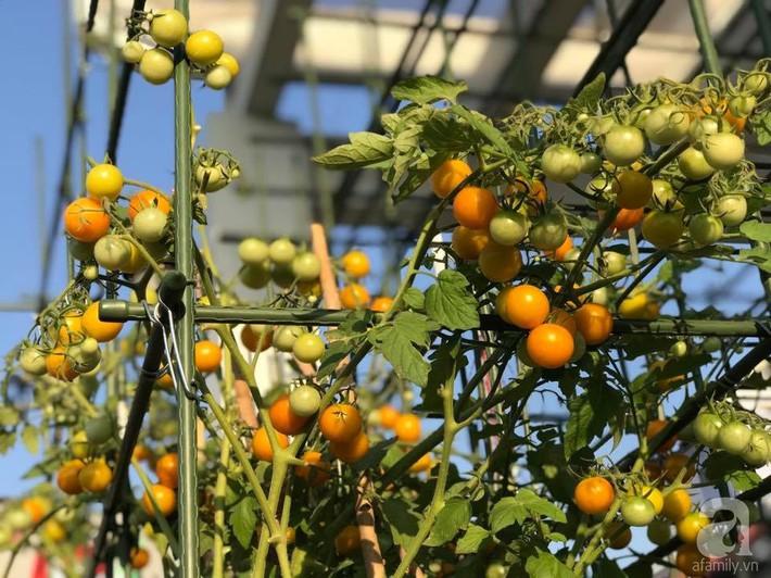 Khu vườn xanh mướt một màu như trang trại rau quả sạch mini của mẹ đảm ở Sài Gòn - Ảnh 2.