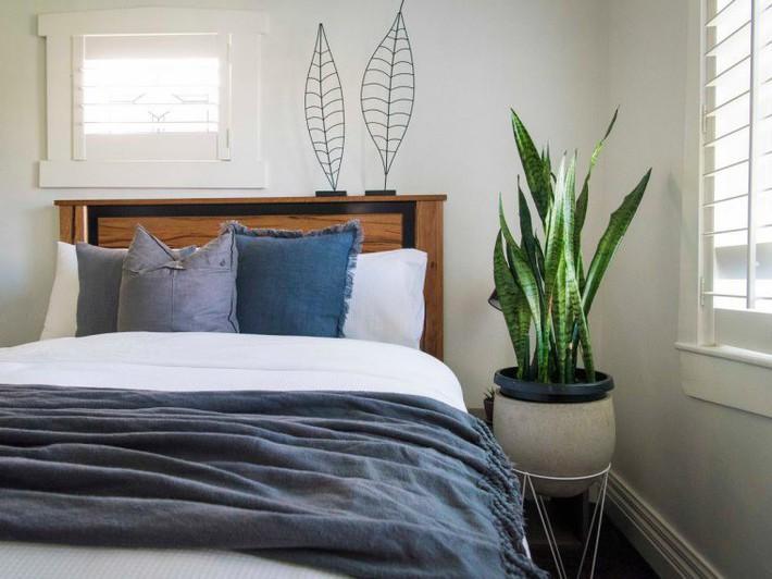 7 loại cây cảnh lọc không khí tốt nhất giúp nhà luôn sạch thoáng, trong lành - Ảnh 1.