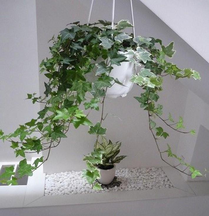 7 loại cây cảnh lọc không khí tốt nhất giúp nhà luôn sạch thoáng, trong lành - Ảnh 6.