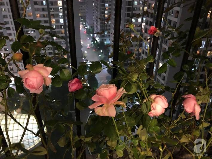 Ban công chỉ 5m² nhưng bốn mùa nở hoa và tổ ấm tràn ngập hương thơm của mẹ Hà Thành - Ảnh 19.