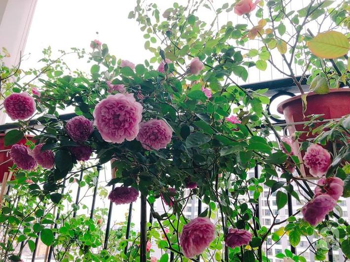 Ban công chỉ 5m² nhưng bốn mùa nở hoa và tổ ấm tràn ngập hương thơm của mẹ Hà Thành - Ảnh 3.