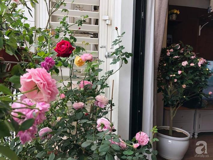 Ban công chỉ 5m² nhưng bốn mùa nở hoa và tổ ấm tràn ngập hương thơm của mẹ Hà Thành - Ảnh 17.