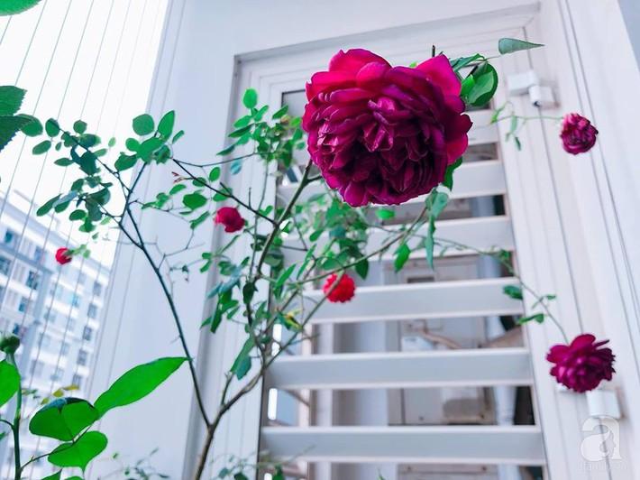 Ban công chỉ 5m² nhưng bốn mùa nở hoa và tổ ấm tràn ngập hương thơm của mẹ Hà Thành - Ảnh 15.
