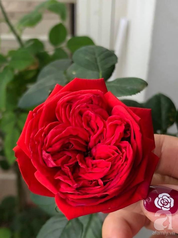 Ban công chỉ 5m² nhưng bốn mùa nở hoa và tổ ấm tràn ngập hương thơm của mẹ Hà Thành - Ảnh 12.