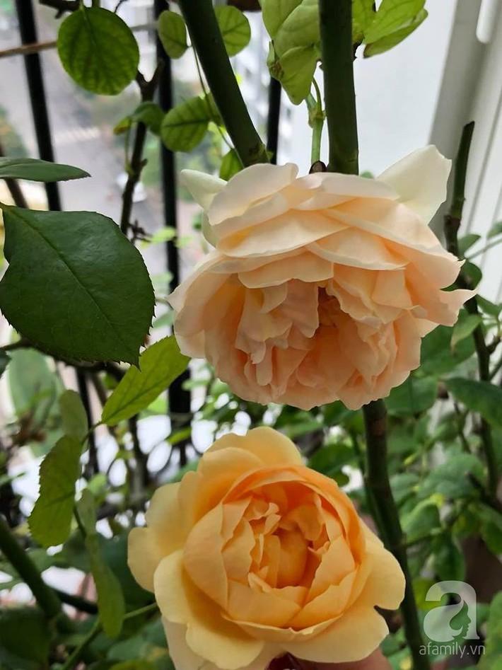 Ban công chỉ 5m² nhưng bốn mùa nở hoa và tổ ấm tràn ngập hương thơm của mẹ Hà Thành - Ảnh 11.