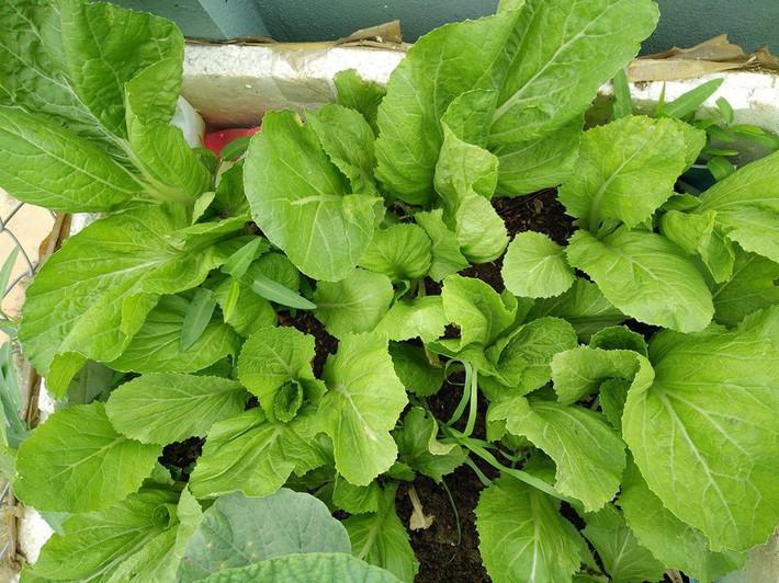 Mẹ đảm ở Quảng Ninh chia sẻ kinh nghiệm 10 năm trồng rau trên sân thượng rộng 75m²  - Ảnh 21.