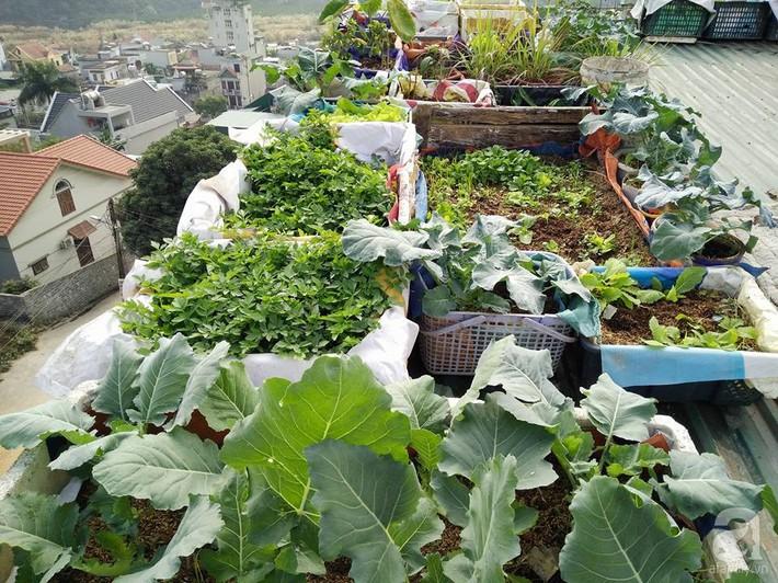 Mẹ đảm ở Quảng Ninh chia sẻ kinh nghiệm 10 năm trồng rau trên sân thượng rộng 75m²  - Ảnh 3.