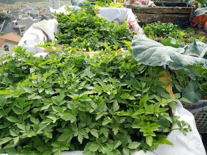 Mẹ đảm ở Quảng Ninh chia sẻ kinh nghiệm 10 năm trồng rau trên sân thượng rộng 75m²  - Ảnh 2.