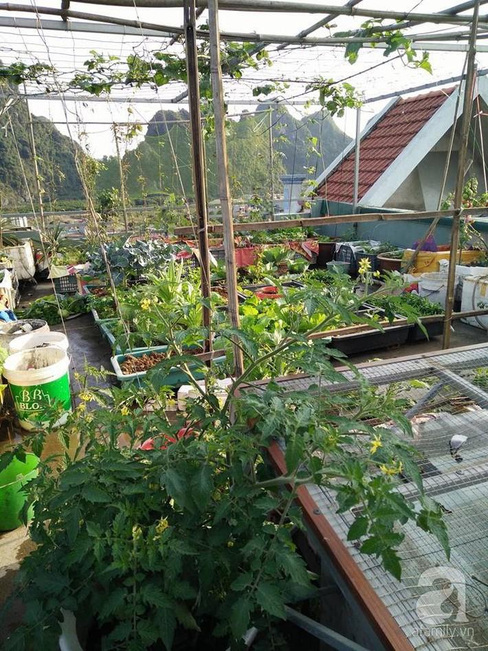 Mẹ đảm ở Quảng Ninh chia sẻ kinh nghiệm 10 năm trồng rau trên sân thượng rộng 75m²  - Ảnh 1.