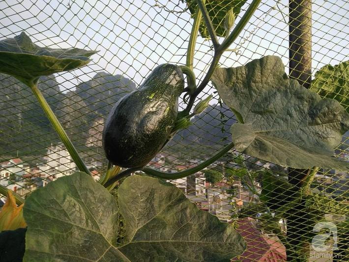Mẹ đảm ở Quảng Ninh chia sẻ kinh nghiệm 10 năm trồng rau trên sân thượng rộng 75m²  - Ảnh 17.
