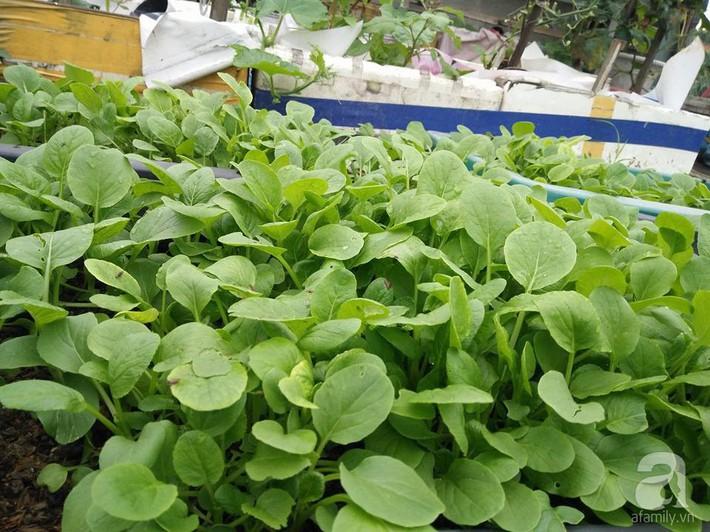 Mẹ đảm ở Quảng Ninh chia sẻ kinh nghiệm 10 năm trồng rau trên sân thượng rộng 75m²  - Ảnh 8.