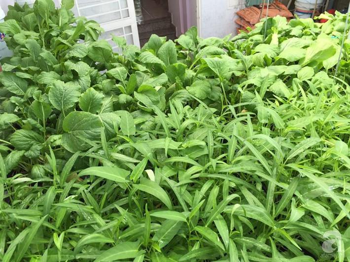 Khu vườn sân thượng xanh mướt rau sạch của người đàn ông chăm chỉ trồng cho gia đình ở Sài Gòn - Ảnh 13.