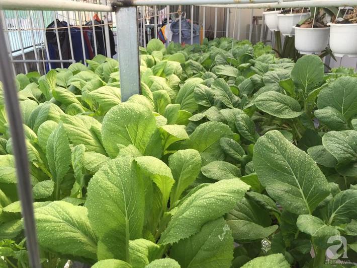 Khu vườn sân thượng xanh mướt rau sạch của người đàn ông chăm chỉ trồng cho gia đình ở Sài Gòn - Ảnh 5.