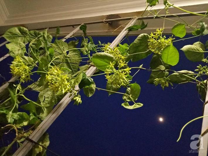 Mẹ đảm ở Quảng Ninh chia sẻ kinh nghiệm 10 năm trồng rau trên sân thượng rộng 75m²  - Ảnh 14.