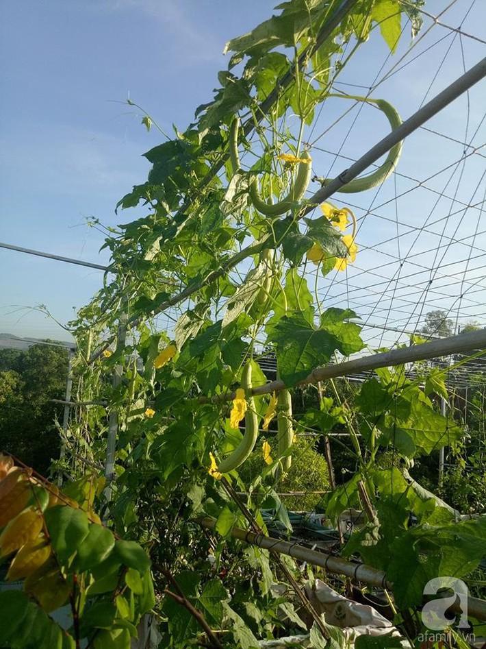 Mẹ đảm ở Quảng Ninh chia sẻ kinh nghiệm 10 năm trồng rau trên sân thượng rộng 75m²  - Ảnh 7.