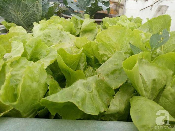 Mẹ đảm ở Quảng Ninh chia sẻ kinh nghiệm 10 năm trồng rau trên sân thượng rộng 75m²  - Ảnh 5.