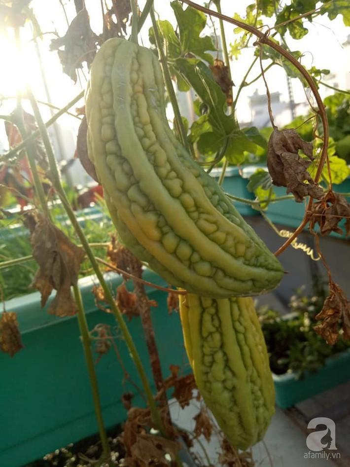 Chỉ 15m², mẹ đảm hai con ở Sài Gòn đã biến sân thượng thành trang trại trên không với đủ loại rau củ xanh mướt - Ảnh 12.