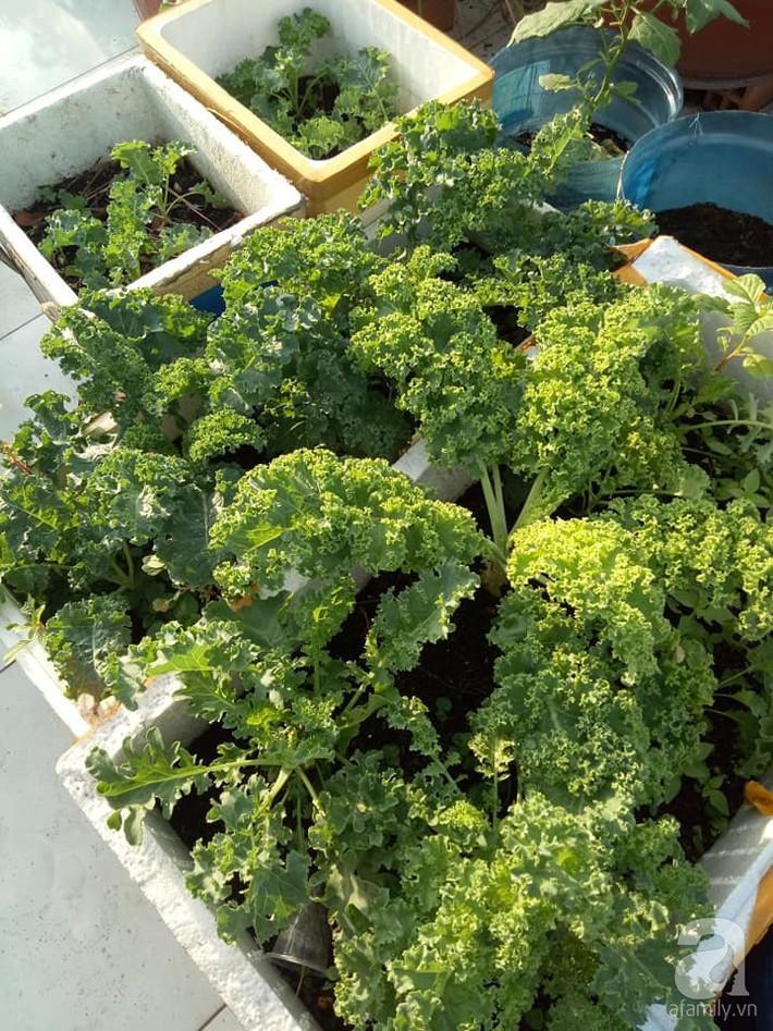 Chỉ 15m², mẹ đảm hai con ở Sài Gòn đã biến sân thượng thành trang trại trên không với đủ loại rau củ xanh mướt - Ảnh 4.