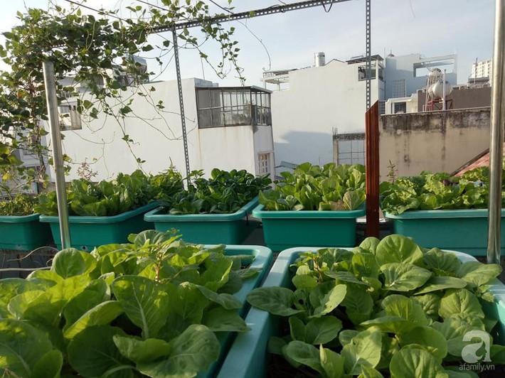 Chỉ 15m², mẹ đảm hai con ở Sài Gòn đã biến sân thượng thành trang trại trên không với đủ loại rau củ xanh mướt - Ảnh 2.