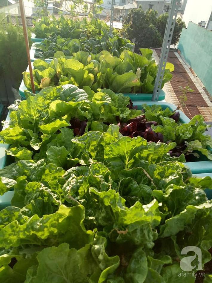 Chỉ 15m², mẹ đảm hai con ở Sài Gòn đã biến sân thượng thành trang trại trên không với đủ loại rau củ xanh mướt - Ảnh 1.