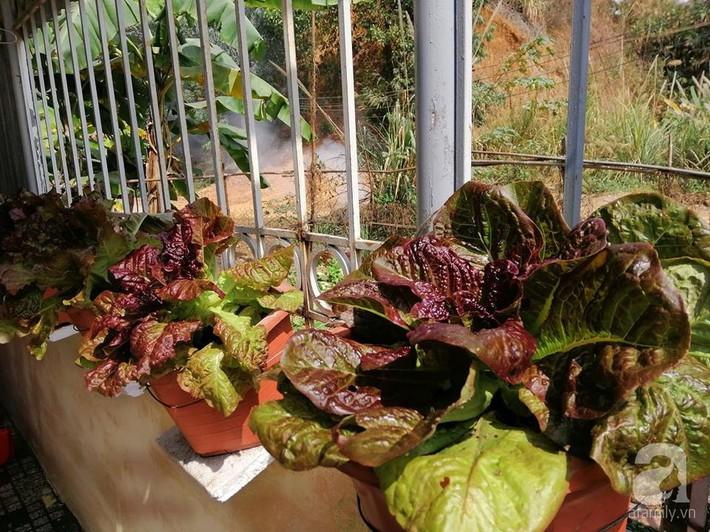 Mẹ đảm ở Quảng Ninh chia sẻ kinh nghiệm 10 năm trồng rau trên sân thượng rộng 75m²  - Ảnh 11.