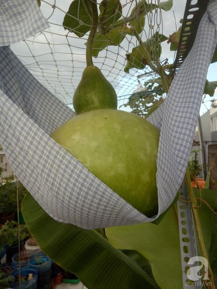 Chỉ 15m², mẹ đảm hai con ở Sài Gòn đã biến sân thượng thành trang trại trên không với đủ loại rau củ xanh mướt - Ảnh 14.
