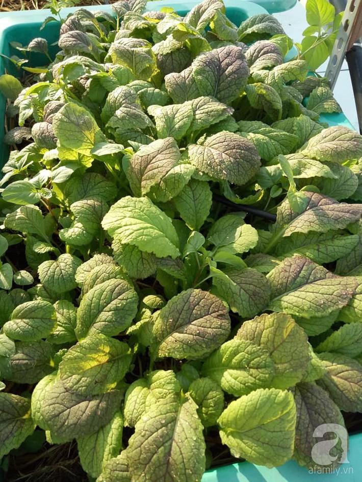 Chỉ 15m², mẹ đảm hai con ở Sài Gòn đã biến sân thượng thành trang trại trên không với đủ loại rau củ xanh mướt - Ảnh 10.