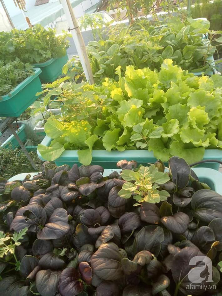 Chỉ 15m², mẹ đảm hai con ở Sài Gòn đã biến sân thượng thành trang trại trên không với đủ loại rau củ xanh mướt - Ảnh 7.