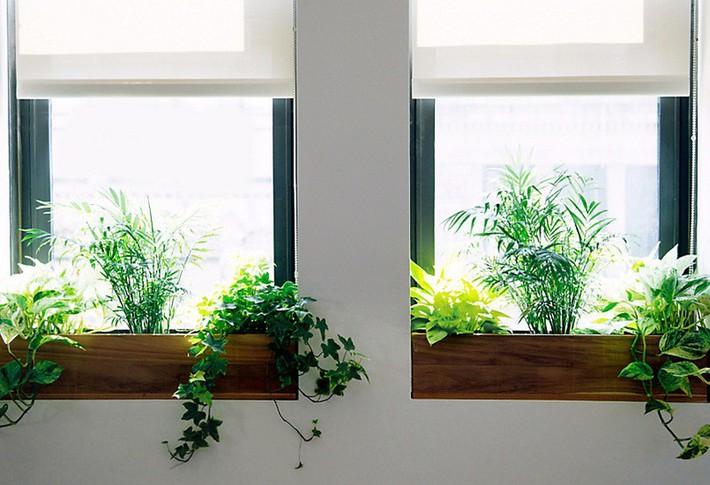 7 cách làm đẹp hữu hiệu cho cửa sổ nhà bạn - Ảnh 7.