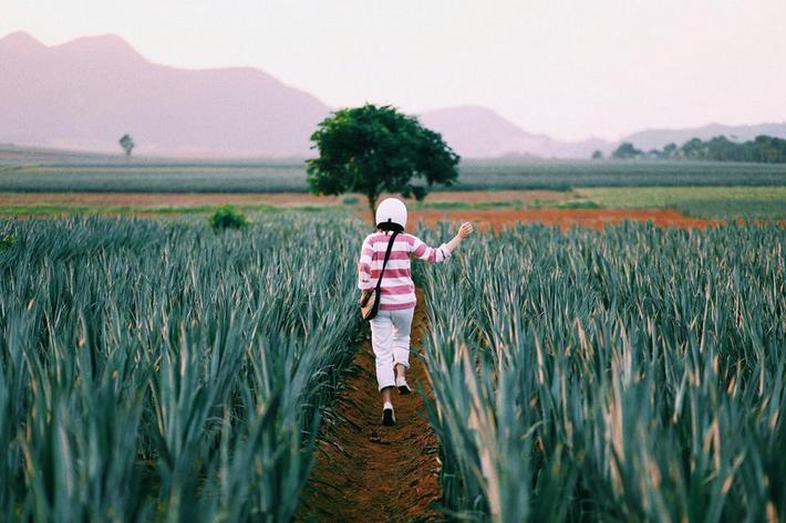 Đồi dứa xanh không xa Hà Nội thích hợp cho nhiều gia đình đi du lịch dịp lễ tới: Nhiều góc sống ảo, dứa ngọt lịm tim - Ảnh 4.