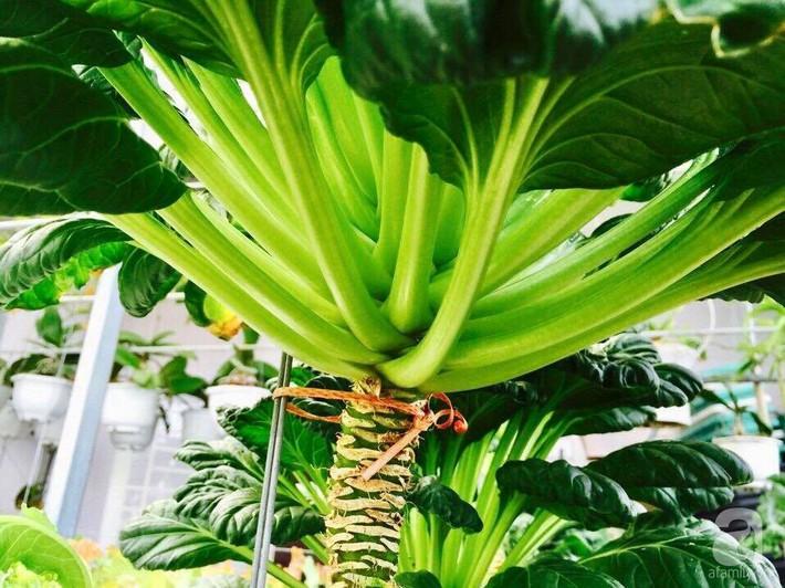 Khu vườn sân thượng xanh mướt rau sạch của người đàn ông chăm chỉ trồng cho gia đình ở Sài Gòn - Ảnh 15.
