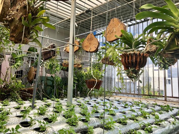 Khu vườn sân thượng xanh mướt rau sạch của người đàn ông chăm chỉ trồng cho gia đình ở Sài Gòn - Ảnh 9.