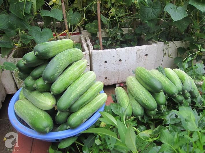 Mẹ đảm ở Hà Nội chia sẻ 12 năm kinh nghiệm trồng rau quả sạch như trang trại trên sân thượng  - Ảnh 20.
