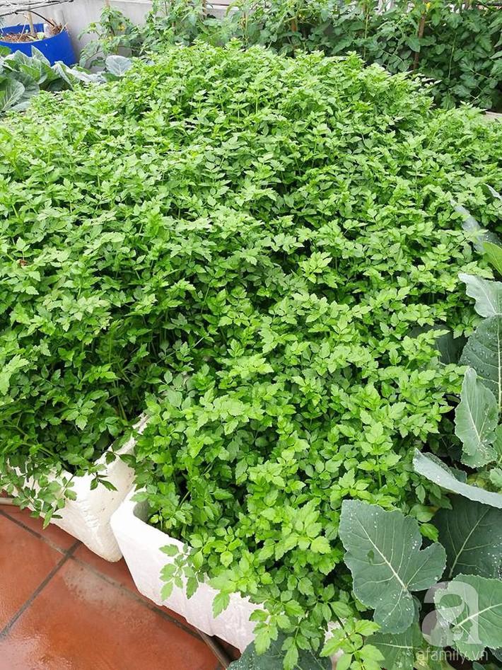 Mẹ đảm ở Hà Nội chia sẻ 12 năm kinh nghiệm trồng rau quả sạch như trang trại trên sân thượng  - Ảnh 19.