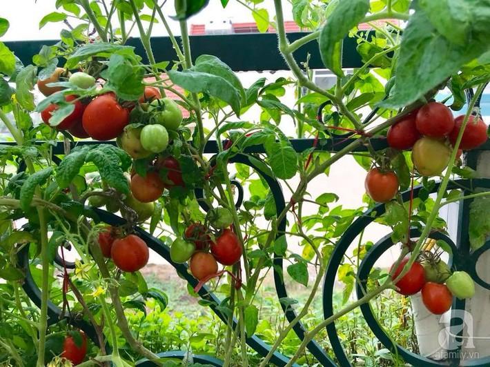 Sân thượng đầy ắp rau quả sạch nhờ bàn tay chăm sóc đảm đang của cô giáo ở Hải Dương - Ảnh 12.
