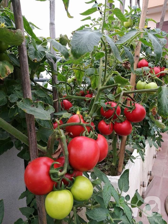 Mẹ đảm ở Hà Nội chia sẻ 12 năm kinh nghiệm trồng rau quả sạch như trang trại trên sân thượng  - Ảnh 18.